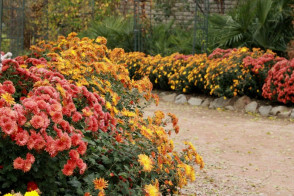 экскурсия в Ботанический сад